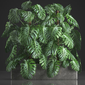 houseplants monstera pot 3D