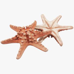 3D model starfish 01