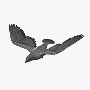 3D rigged pigeon model