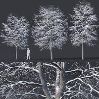 tilia trees 3D