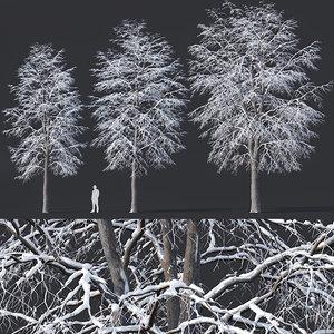 3D tilia trees