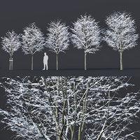 5 tilia trees 3D model