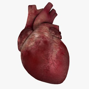 3D model human heart animation rig