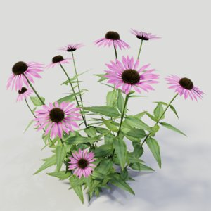 3D model echinacea purpurea