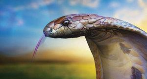 3D king cobra model