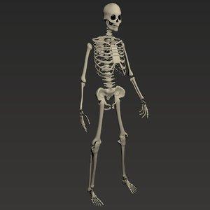 3D dark human skeleton rigged