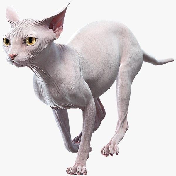 3D sphynx cat animations model