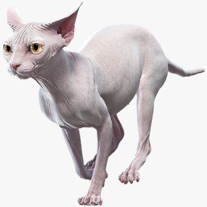 3D sphynx cat animations model