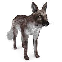 arctic summer fox model