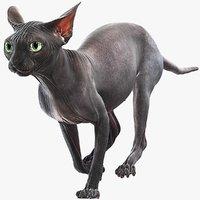 sphynx cat animations 4 3D model