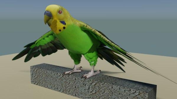 3D bird parakeet model