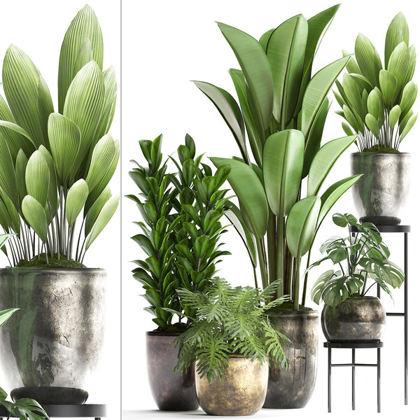 houseplants exotic plants model