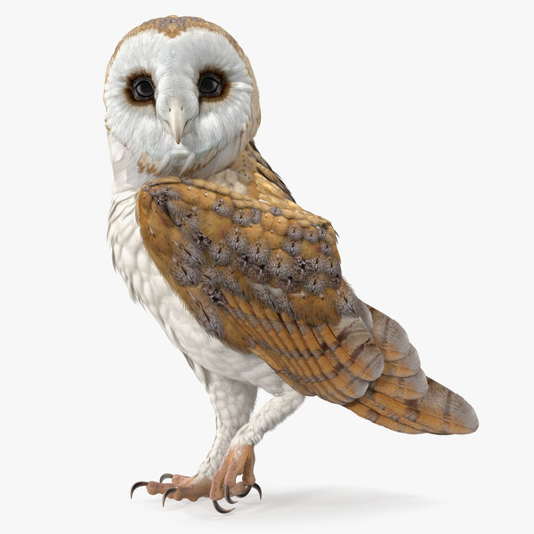 3D barn owl standing