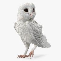 3D white barn owl standing