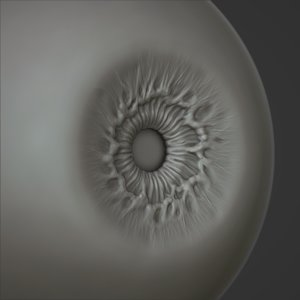 eye eyeball anatomy model