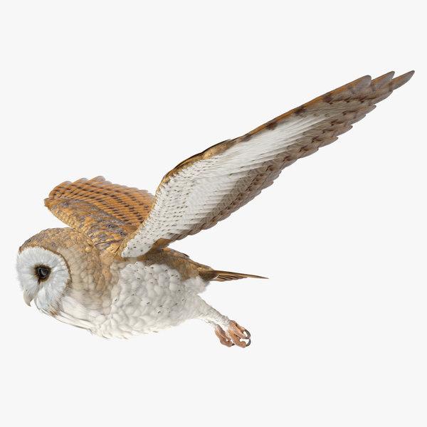 barn owl flying bird 3D model