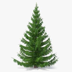 norway spruce 3D model
