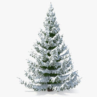3D spruce tree covered snow