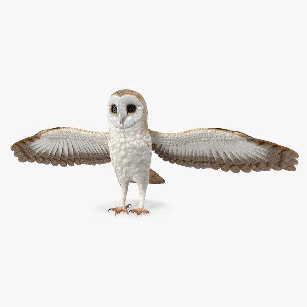 3D common barn owl model