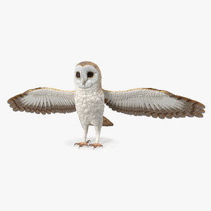 3D common barn owl model