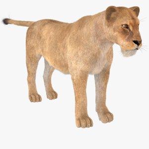 lioness fur model