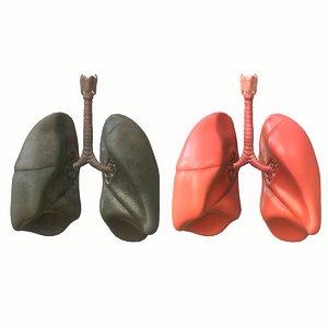 3D human lungs smoker
