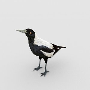 nature bird animal 3D