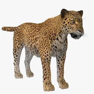 3D model vary tiger fur