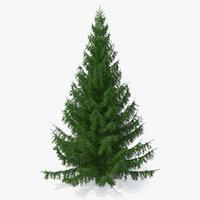 3D white spruce tree model