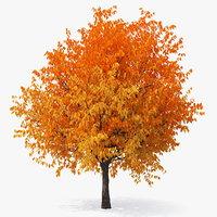 autumn cherry tree model