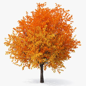 autumn cherry tree model