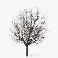 3D winter cherry tree model