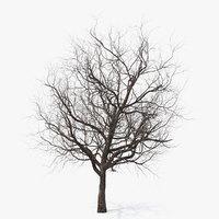 3D winter cherry tree model