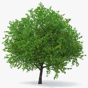 3D cherry tree