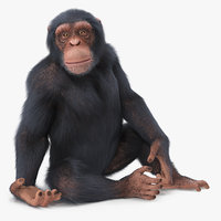 light chimpanzee animal fur 3D