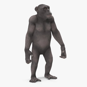 chimpanzee dark pan rigged 3D model