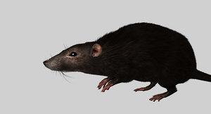 3D rat rigged model