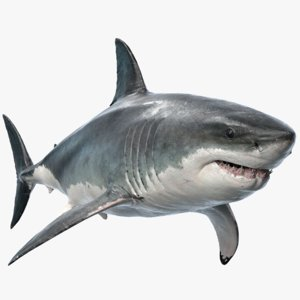 great white shark 3D model