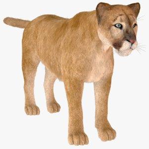 vary tiger fur 3D model