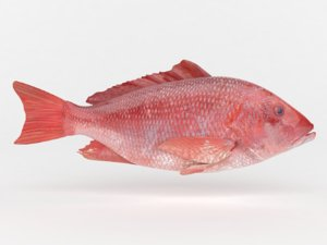 red snapper fish 3D