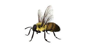 honeybee 3D model