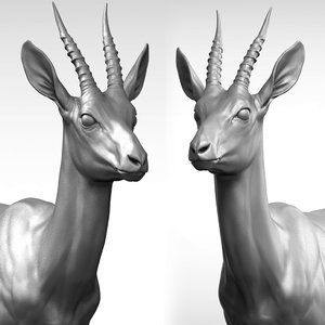 3D gazelle antelope gazella model