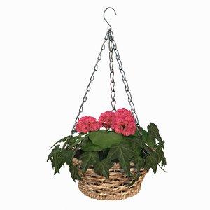 hanging basket plant model