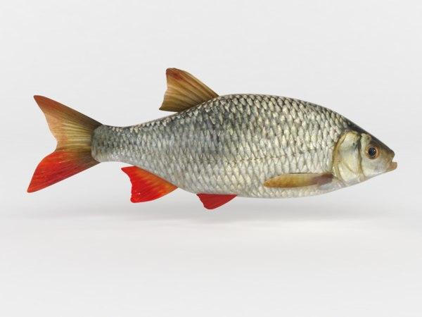 3D rudd fish