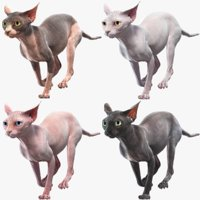 Sphynx Cats Collection  Animated