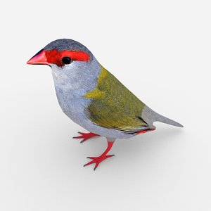 3D finch neochmia temporalis model