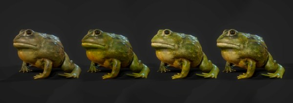 3D pixie frog animation