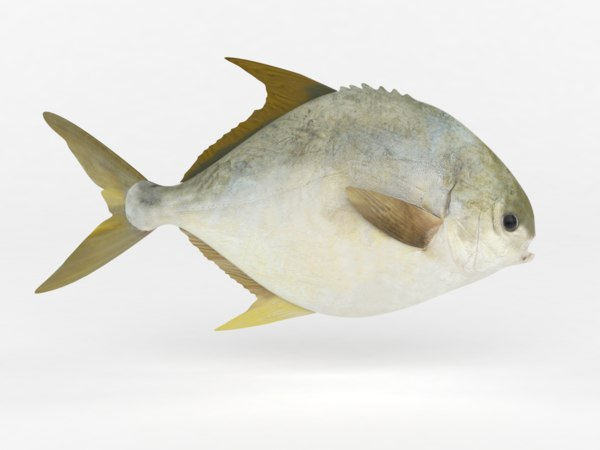 pompano fish 3D model