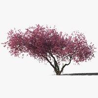 3D plum tree model