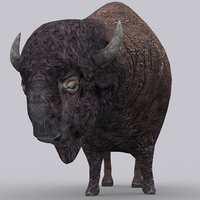 bison - model
